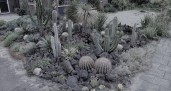 Cactus-Rock-Garden-Design 2